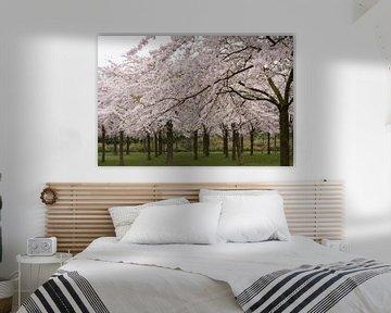 Kirschblüte Amsterdam von Charlene van Koesveld