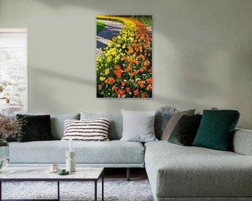 Reihen der gelben Narzissen und der orange Tulpen entlang gebogenem Gehweg von Ben Schonewille