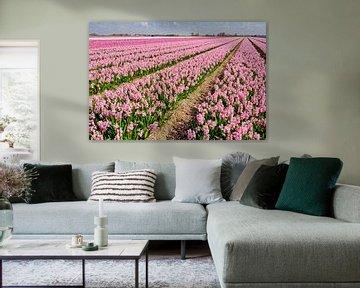 buntes Blumenzwiebelfeld im Frühling von eric van der eijk