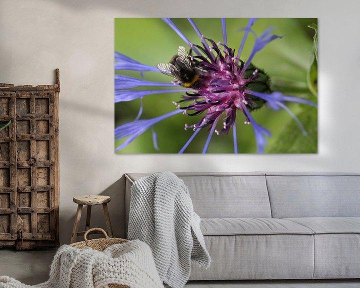 Sfeerimpressie: Cornflower with bumblebee van Erich Werner