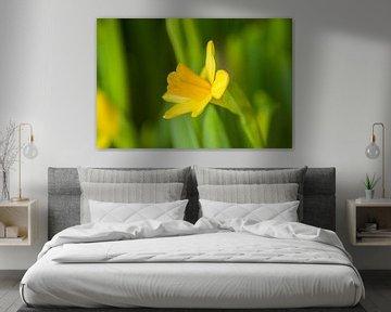 Gelbe Narzisse von Stefanie de Boer