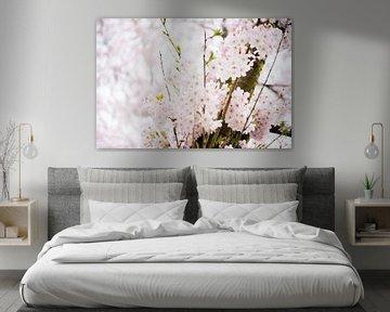 Auswahl an Kirschblüten von Stefanie de Boer