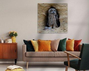 Uhu * Bubo bubo *, Jungvogel mit Beute von wunderbare Erde