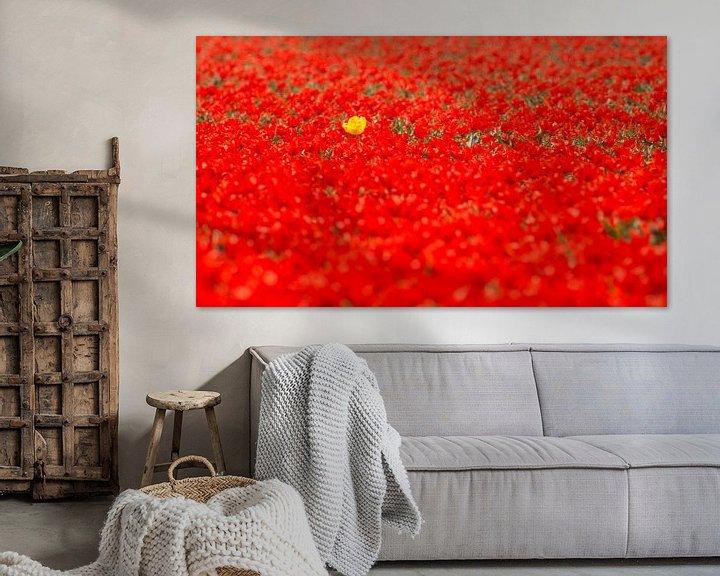 Sfeerimpressie: De gele tulp in een veld van rood van Sjoerd van der Wal