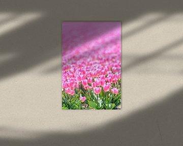 Tulipes roses qui poussent dans un champ sur Sjoerd van der Wal