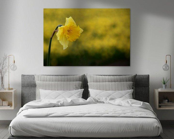 Sfeerimpressie: Gele Narcis van Henk Langerak