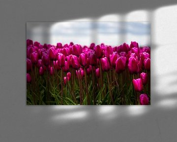 Nederlandse Tulpen von Sjoerd Tullenaar