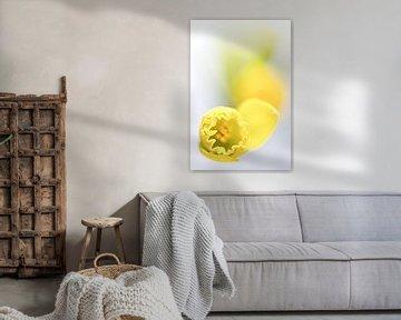 Soon it's spring ... (bloem, narcis) von Bob Daalder