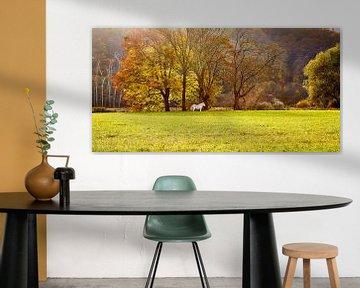 Herfst in de Ardennen von Photo Dante
