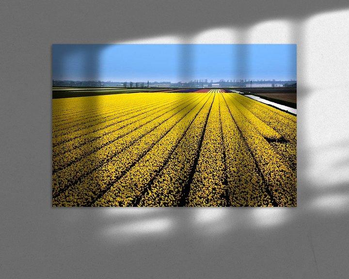 Sfeerimpressie: Nasrcissenveld van Henk Langerak