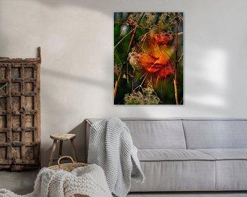 Jungle - Wijnstokken in de jungle van Christine Nöhmeier
