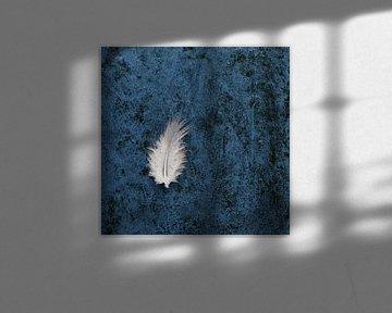 Feather van Cor Ritmeester