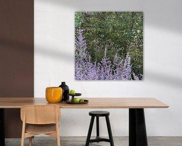 Vijftig tinten paars von Rob Hendriks