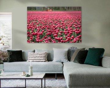 tulpen von Alexander Michalewski