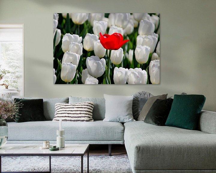 Sfeerimpressie: eenzame rode tulp in veld witte tulpen in de zon in Holland van André Muller
