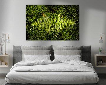 plant van Bjorn Brekelmans