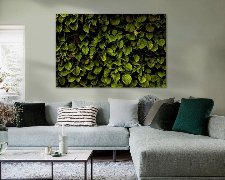 Beispiel: Hydrangea petiolaris von Arc One