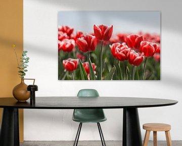 Rot mit Weißen Tulpen von Charlene van Koesveld