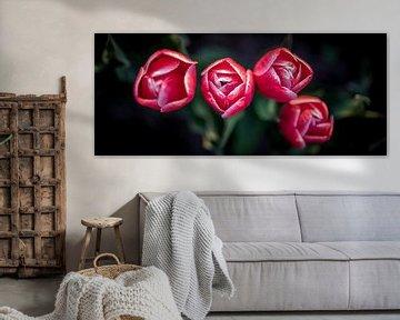 Rode tulpen close up von Arjen Schippers