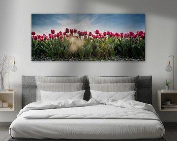 Rode tulpen in het veld von Arjen Schippers