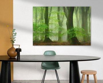 Forêt de Tutu sur Lars van de Goor