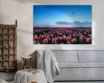 Tulpenveld von Peter Abbes