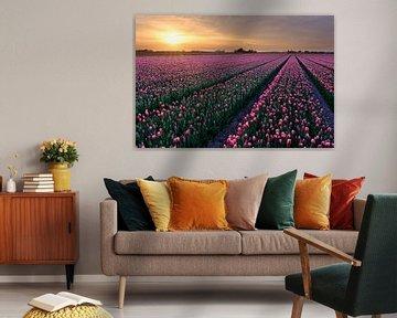 rote Tulpen in einem Zwiebelfeld im Frühling von eric van der eijk