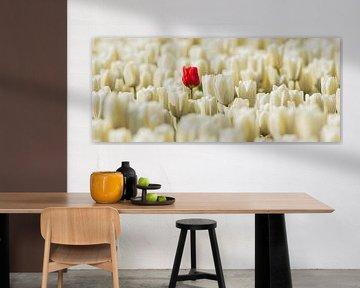 rote einsame Tulpe von Gert Hilbink