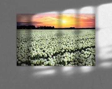 Weisse Tulpen von Gert Hilbink