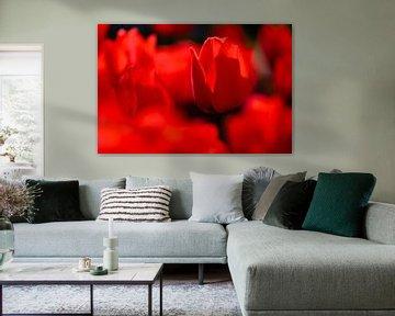 Rote Tulpen von Edwin van Wijk