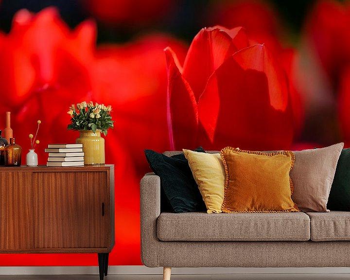 Sfeerimpressie behang: Rode tulpen van Edwin van Wijk