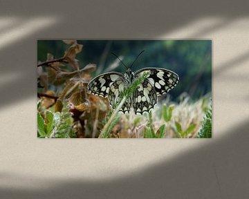 Schmetterling von Felix wellink