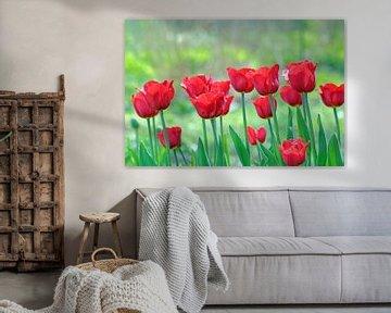 Leuchtend rote Tulpen sur Ronald Smits