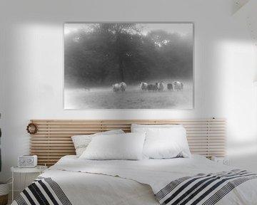 De schapendrijver von Jan Dolfing