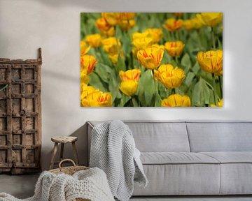Niederländische gelbe Tulpen von Stefanie de Boer