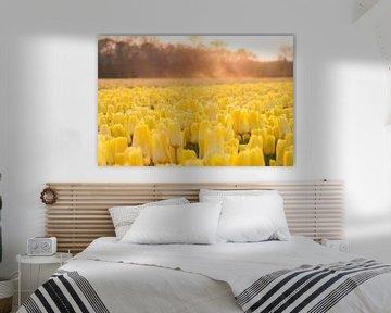 Gelbe Tulpen mit beeinflussendem Sand bei Sonnenuntergang von Stefanie de Boer