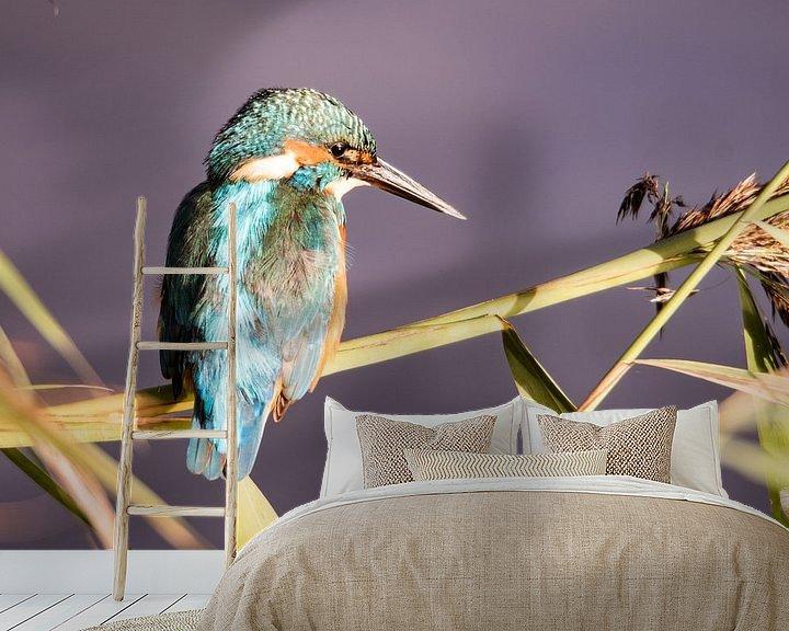 Sfeerimpressie behang: IJsvogel op rietstengel van Barend de Ronde