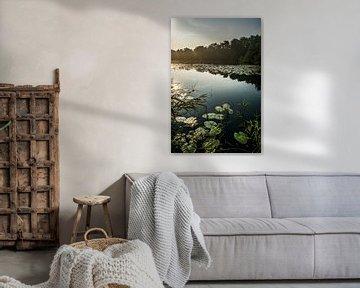 Zonsopkomst Naardermeer van Barend de Ronde
