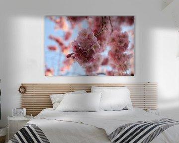 Roze bloesem tak in de lente van Birgit Molier