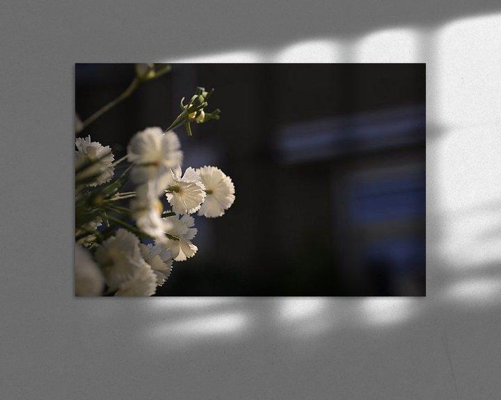 Beispiel: Blume weiß von Agnes Meijer