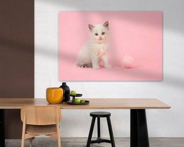 Ragdoll kitten in roze sur Elles Rijsdijk