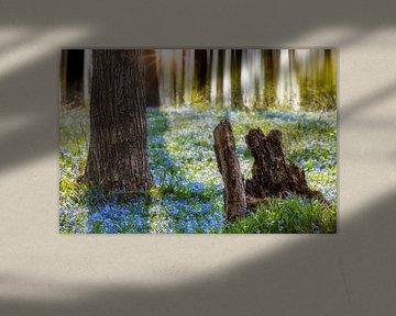 Blauwstaart in het bos van Tilo Grellmann | Photography