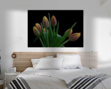 Tulipes sur Tilo Grellmann | Photography