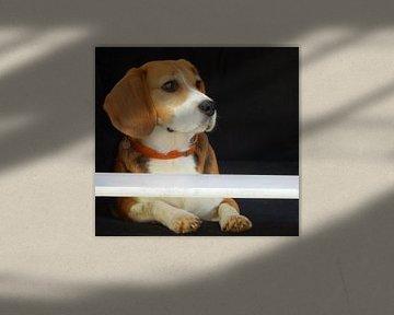 hond beagle  von Joke te Grotenhuis