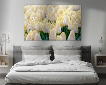 Witte tulpen met een geel, rood accent von Jenco van Zalk