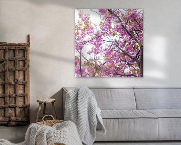 Bloesem in roze 4 van Wen van  Gampelaere