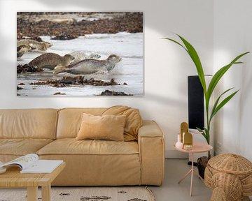 Robben gelangen schnell ins Wasser. von Andius Teijgeler