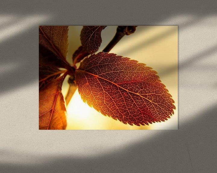 Sfeerimpressie: Blad in het Zonlicht / Bloem / Bloemblaadjes / Bladnerf  / Nervatuur/ Bruin / Oranje / Rood / Geel / van Art By Dominic