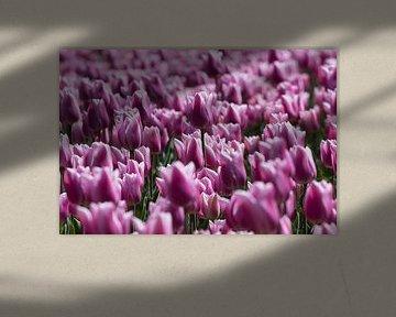 Bloeiende tulpen von Bert van Wijk