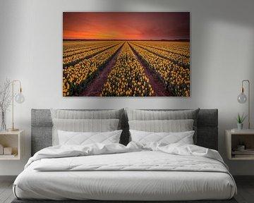 Gele tulpen bij zonsopkomst von Jenco van Zalk